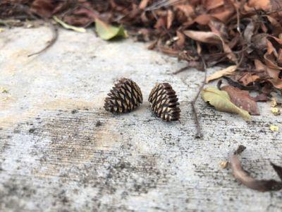 pine cone wood stud earrings